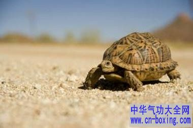 什么人适宜养龟 养龟的风水注意事项养龟的风水注意事项中国人特别
