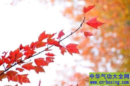 九月枫叶风景图片